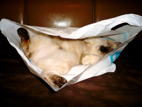 Cat_in_the_bag